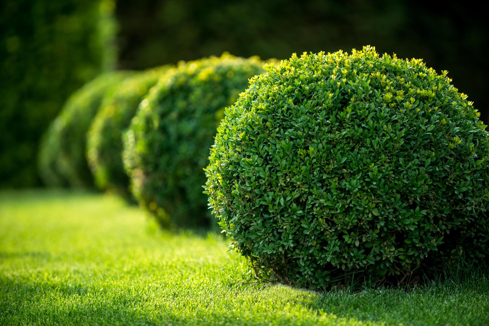 Bushes and shrubs gardener s supply center for Arbustos ornamentales de exterior