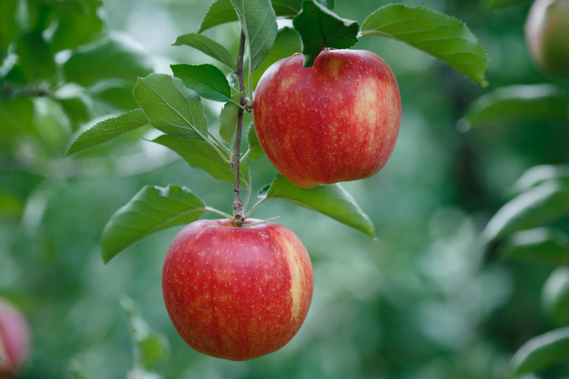 Fruit Tree Home Grown
