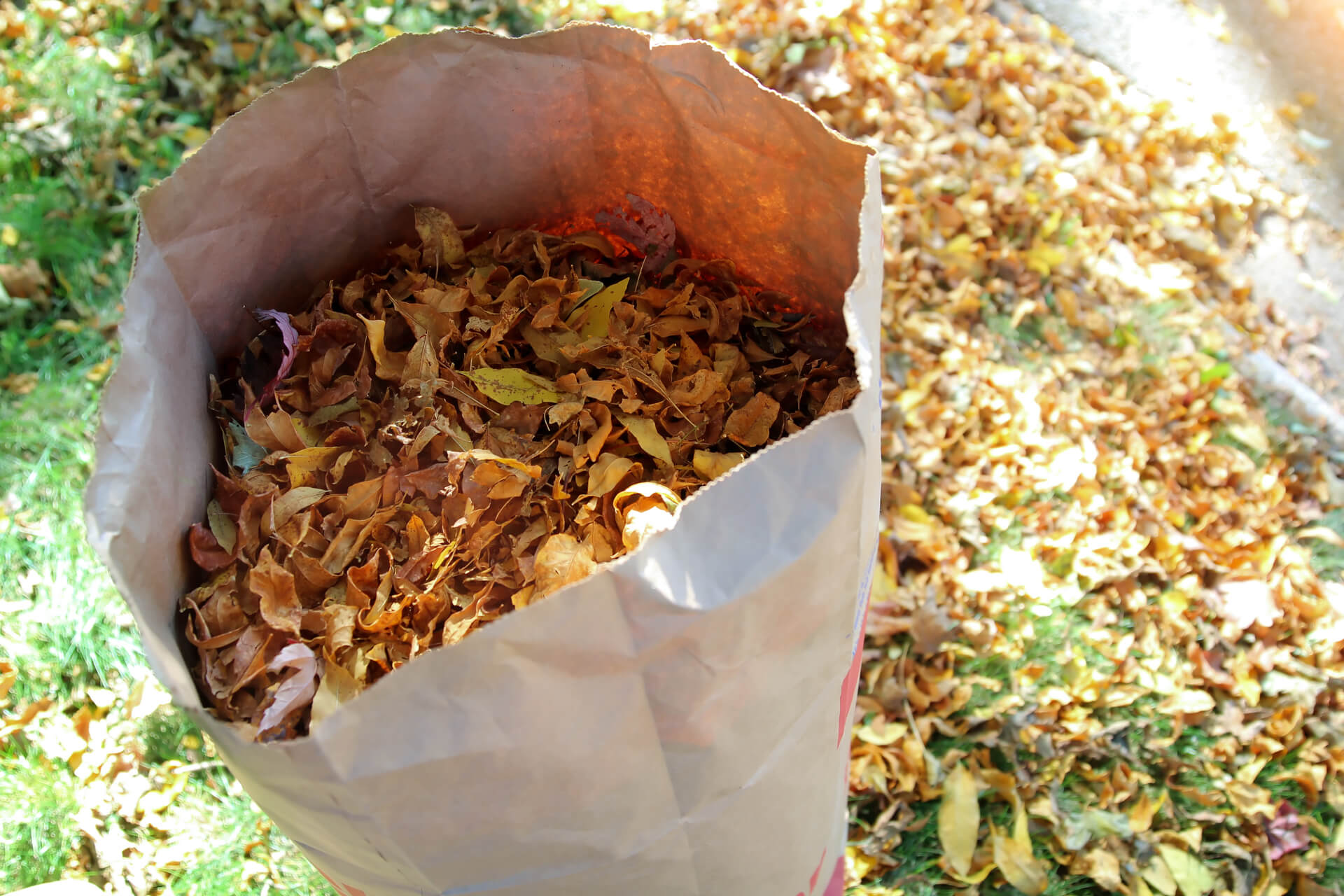 Making Compost | Using Leaf Bags to Compost | Fall Garden Care ...