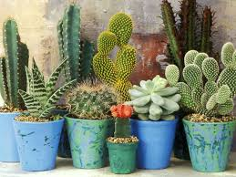 cacti and succulent plants